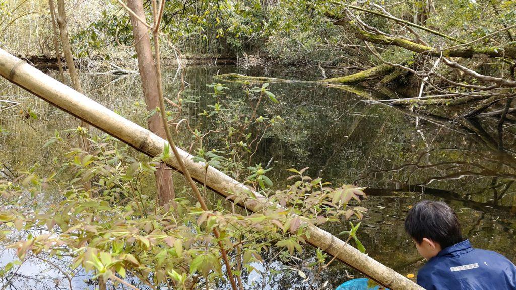 ザリガニ沼