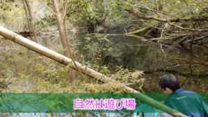 竹の子堀り、ザリガニ
