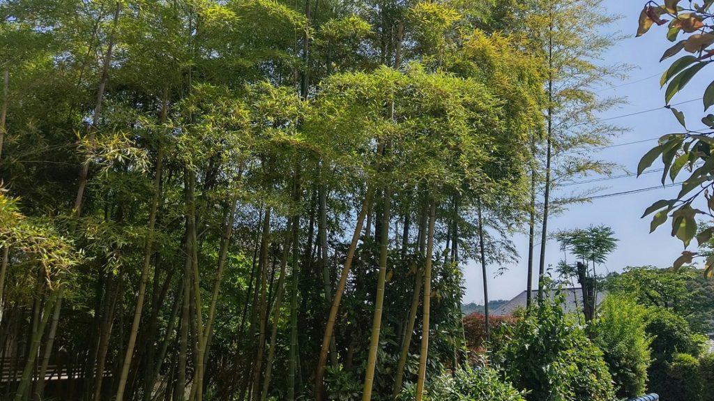 竹を切る 隣の境界線 クレーム