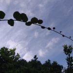 キウィの空