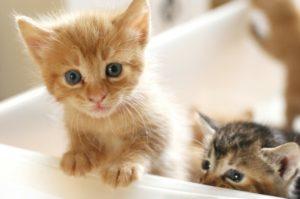 量子学シュレディンガーの猫