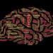 これからの有用な人間は「脳をコピー」される人