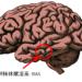 イメージを実現するRASという脳の器官